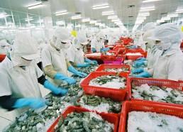 Nhà máy chế biến thủy sản Trung Hải, Quảng Nam (12/2102)