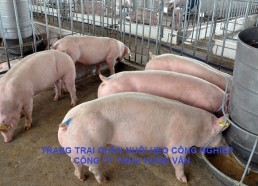 Trang trại chăn nuôi heo công nghiệp Hùng Vân (07/2012 và 07/2017)